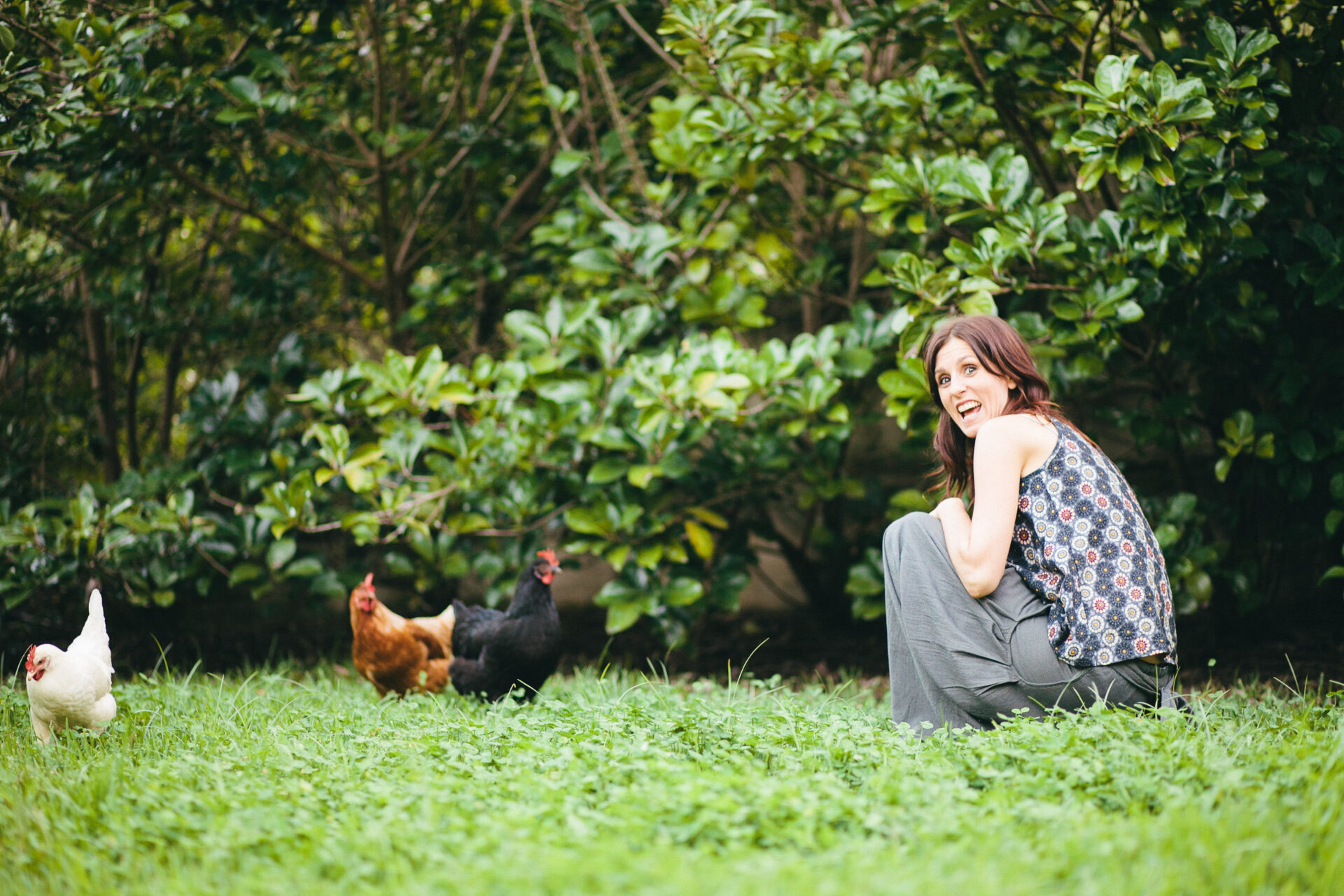 COOPED UP AT HOME – KEEPING BACKYARD CHICKENS